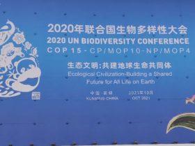 重保战果 | 微步在线尽责守护COP15大会网络安全