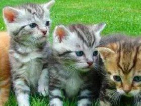 如何在一张小猫图片中隐藏 1 亿美金的交易?|用 Python 隐写术