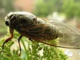 螳螂捕蝉,黄雀在后——记对某韩国商城的渗透测试