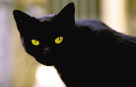意大利猫咪继承主人千万欧遗产 跻身动物富豪榜