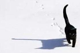 踏雪无痕—linux入侵痕迹清理指南